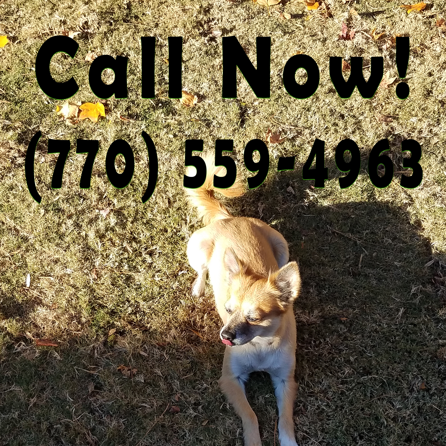 call now image 2